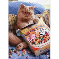 Cereal Cat