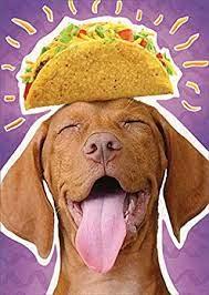 Dog Taco