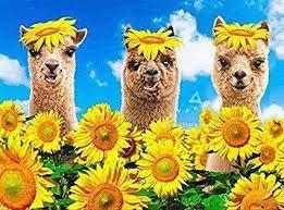 Happy Sunny Funny Birthday