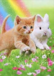 Kitty & Bunny Birthday