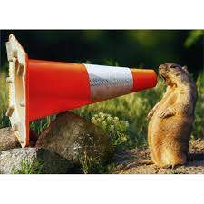 Groundhog Construction Cone
