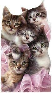 Group of Kittens