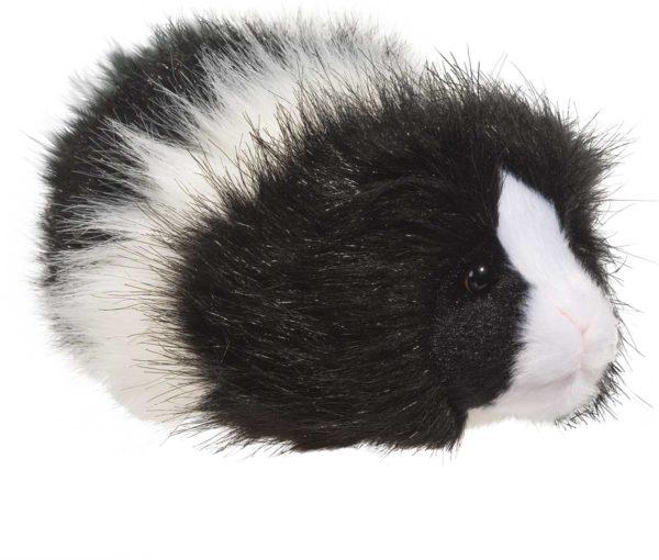 Angora Guinea Pig