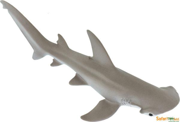 Bonnethead Shark