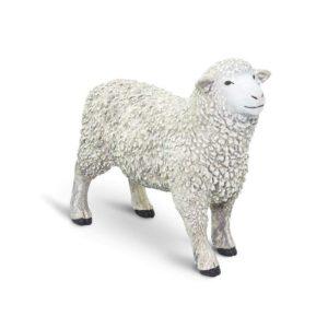 Safari Sheep