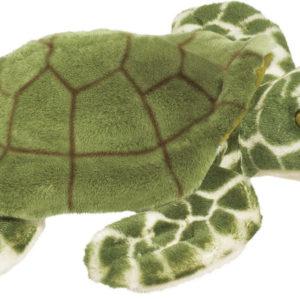 Douglas Toti Sea Turtle